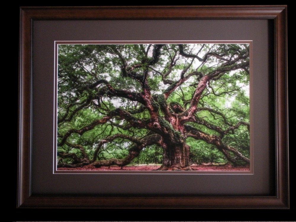 Angel Oak by Dan Robbins